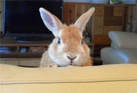看躲在房间的动物图片