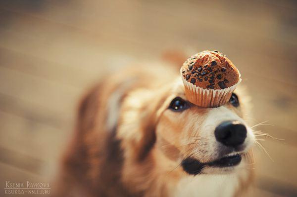 来自一组温馨浪漫的宠物摄影——人和狗