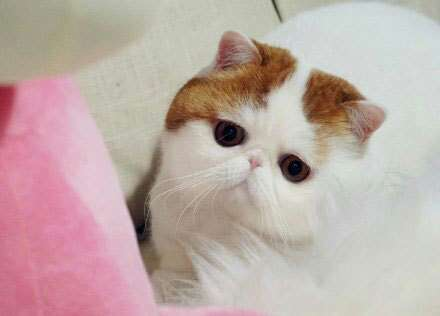 图自网络红喵红小胖snoopy