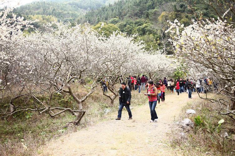 日)御景峰国家森林公园梅花节