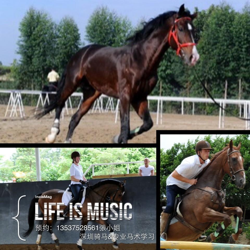深圳哪里可以騎馬?深圳光明跑馬場在哪個地方?