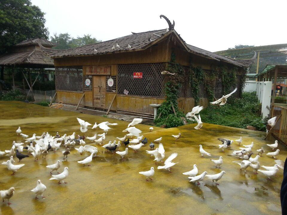 松湖生态园体验世外桃源农家乐