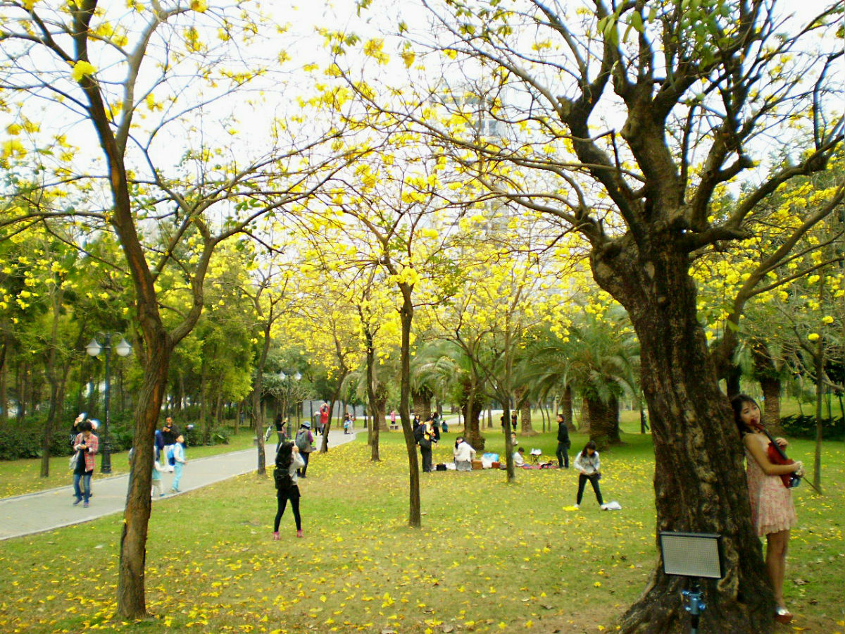 自然林木花朵风景区