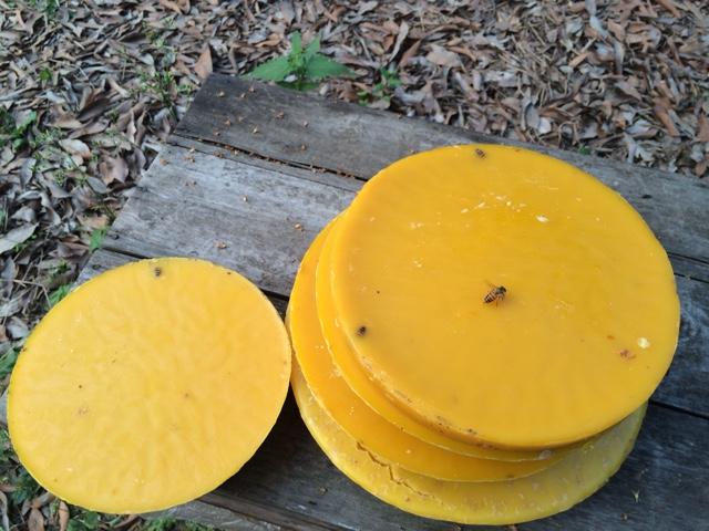 塑料桶诱蜂图片