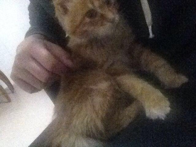 前段时间救助的小可爱黄色小猫咪送
