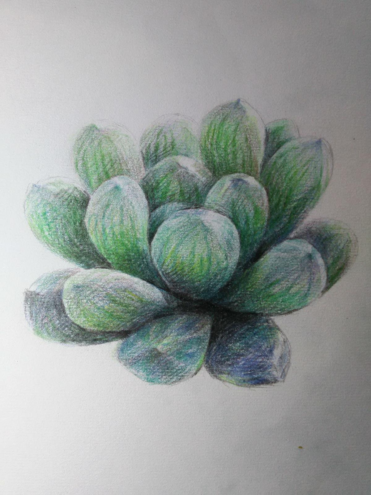 最近迷上画多肉植物(彩色铅笔)