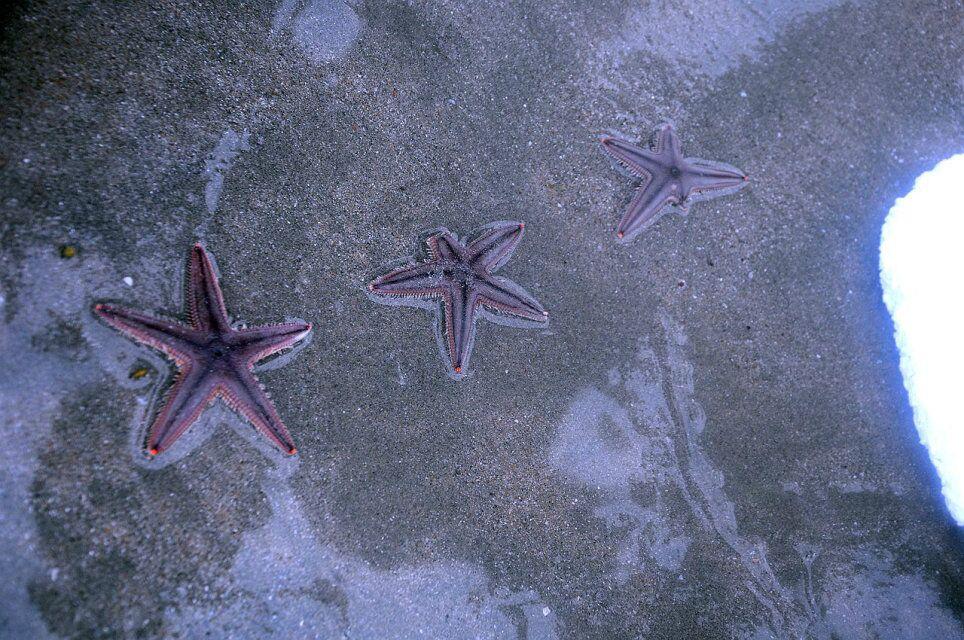 > 双轮汇户外活动4月19日惠东海岸线—狮子岛海岸线穿越,捡海星 作业