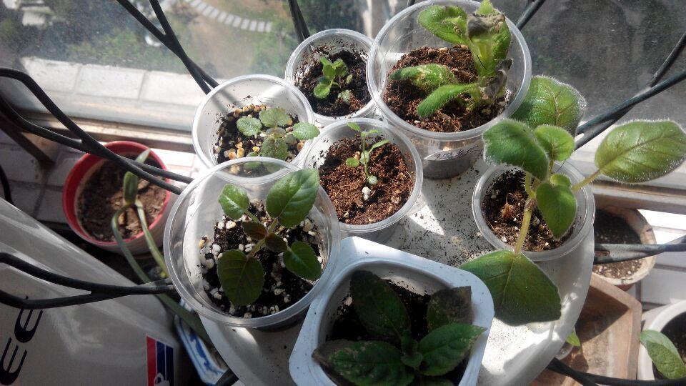> 记录苦科种子成长过程