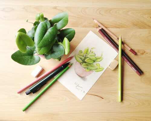 彩铅手绘多肉植物,肉肉大合集~恋漫分享
