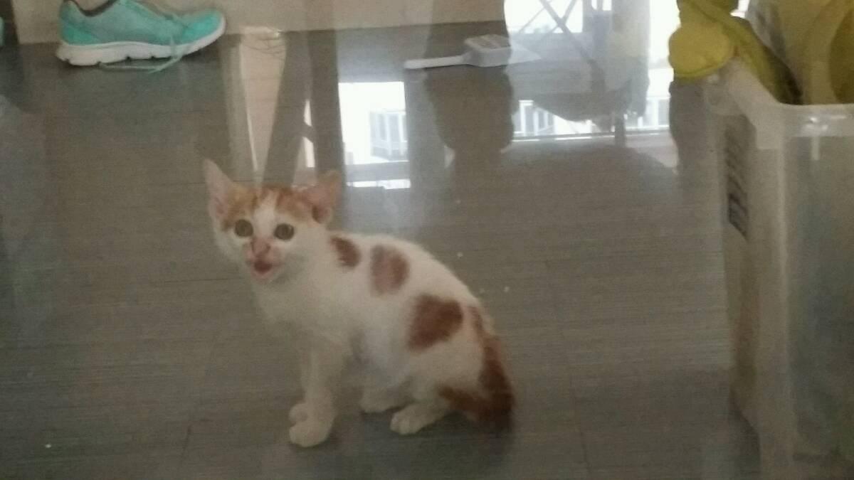 超级可爱的小萌猫找家